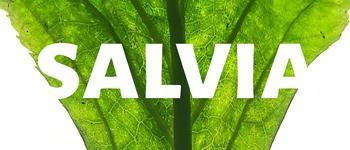 Salvia Divinorum - Your Questions about tripping on Salvia Answered
