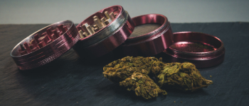 Want to Buy a Weed Grinder? These Are The Options