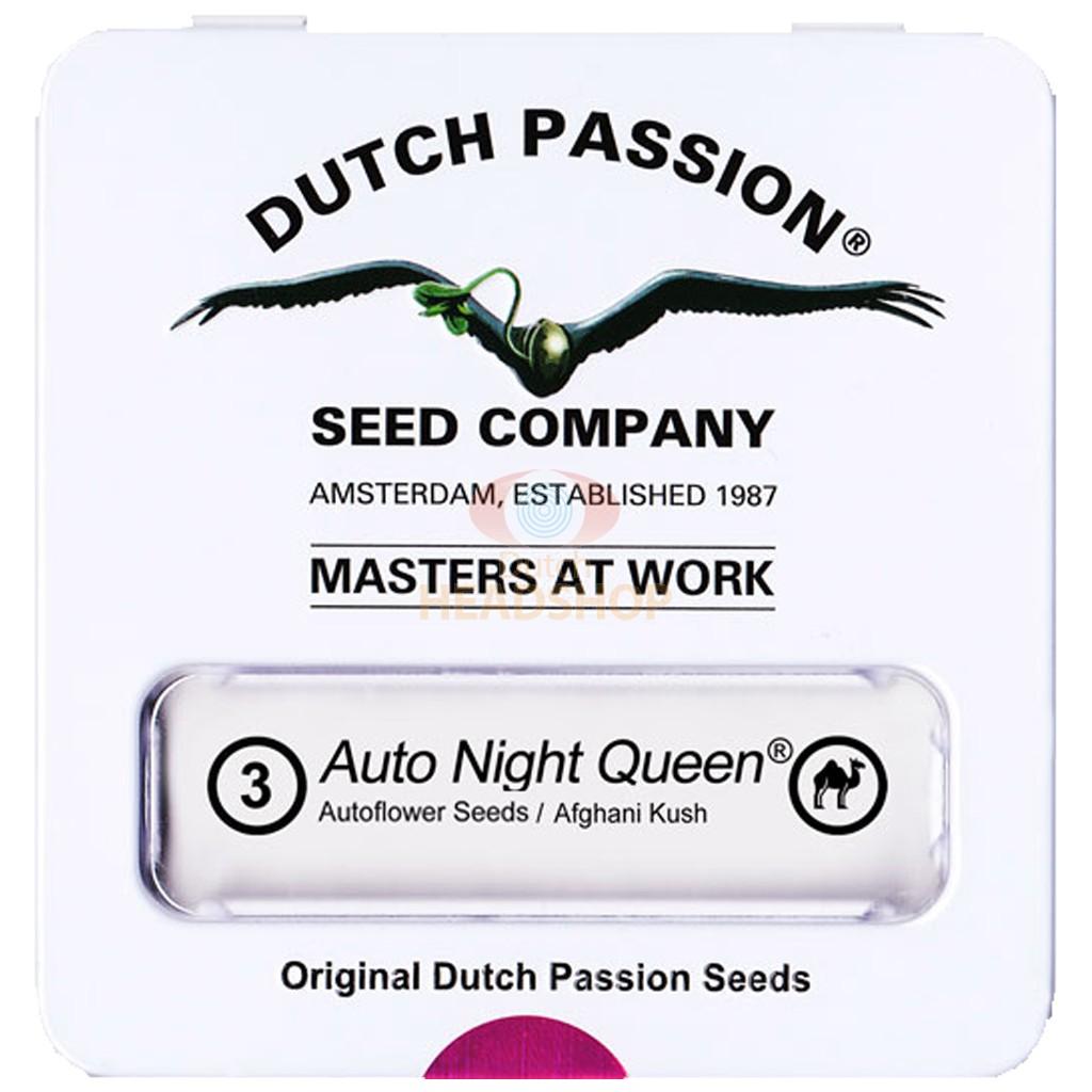 Auto Night Queen (Dutch Passion) 3 seeds