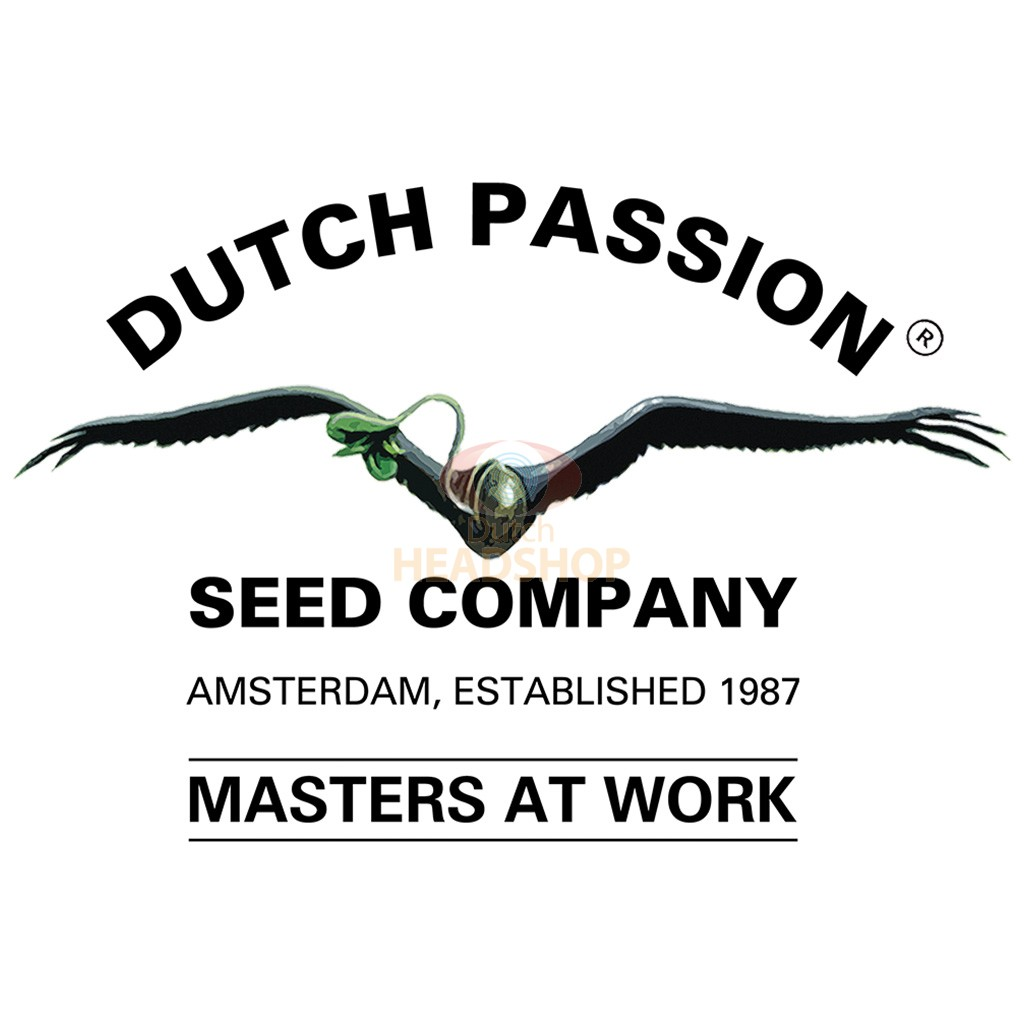 Frisian Duck feminized (5 seeds) Dutch Passion