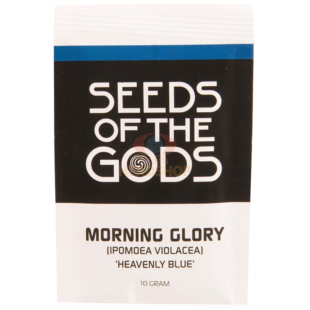 Morning Glory seeds [Ipomoea Violacea] (Seeds of the Gods) 10 grams