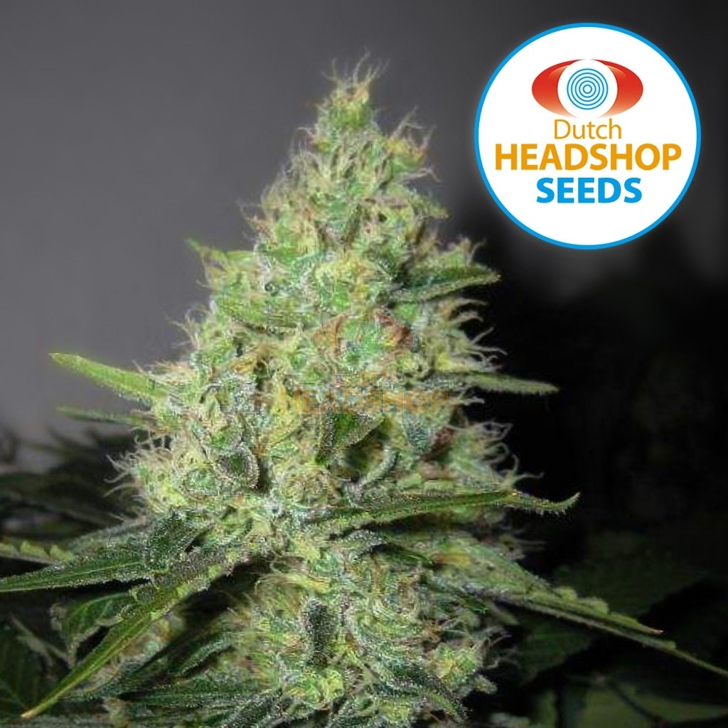 Auto Pineapple Express (Private Label)