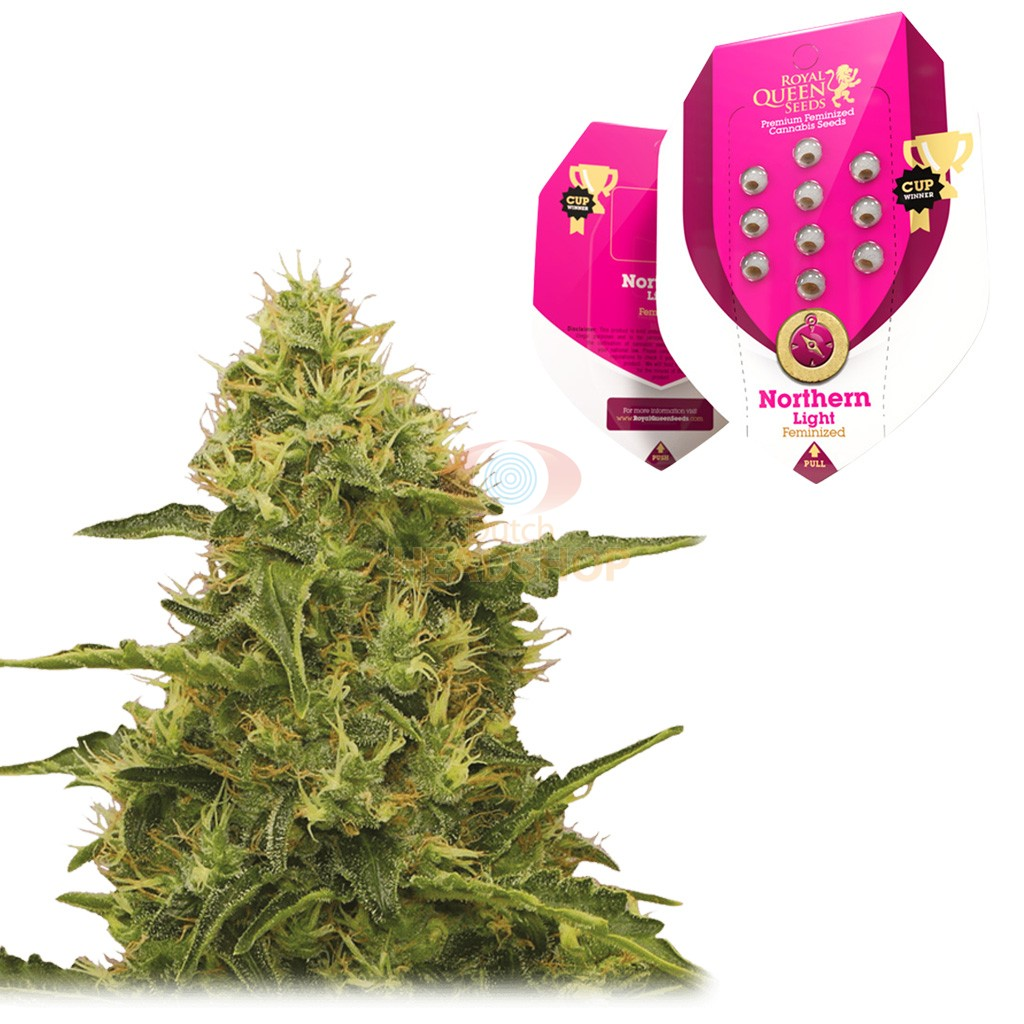 Northern Light Feminized 5 Seeds Royal Queen