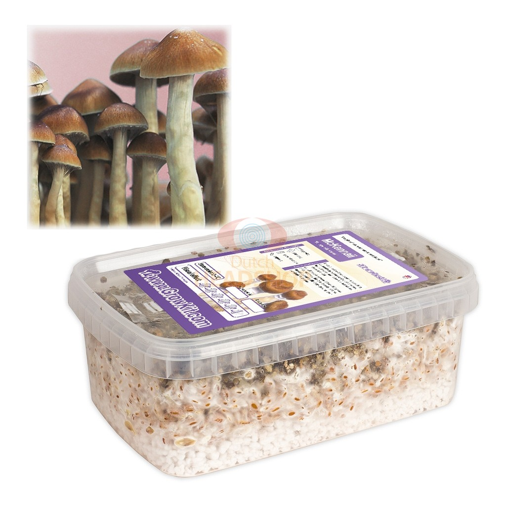 Magic Mushroom Growkit McKennaii (Ready-to-Grow)