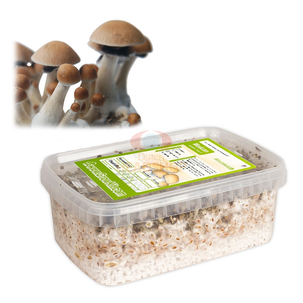 Mushroom Growing Kit Near Me