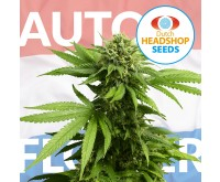 Classic Autoflower Mix (Private Label) 5 seeds