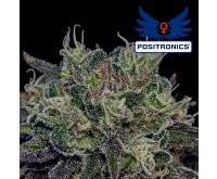 Black Widow (Positronics) 5 seeds