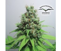 CBD Skunk Haze (Dutch Passion / CBD Crew) 5 seeds