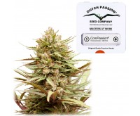 ComPassion (Dutch Passion) 5 seeds feminized