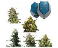 Medicinal Mix CBD (Royal Queen Seeds) 5 seeds