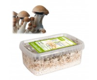 Magic Mushroom Growkit Mexicana (Ready-to-Grow)