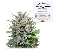 Passion #1 Fast Flowering (Dutch Passion) 5 seeds