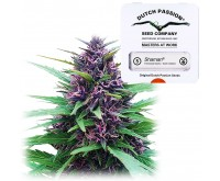 Shaman feminised (5 seeds) Dutch Passion