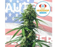 USA Autoflower Mix (Private Label) 5 seeds