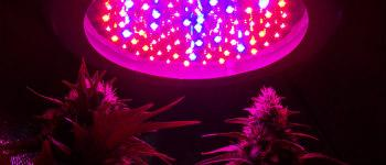 LED Grow Lamp for Cannabis - Pros and Cons