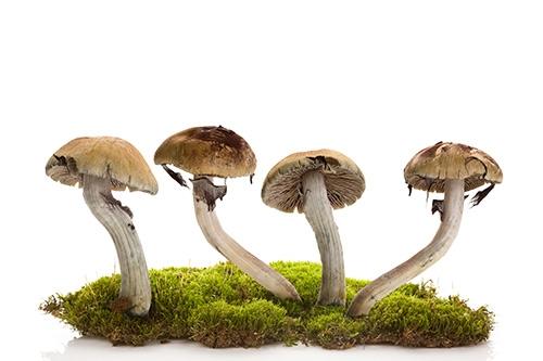 shrooms on moss