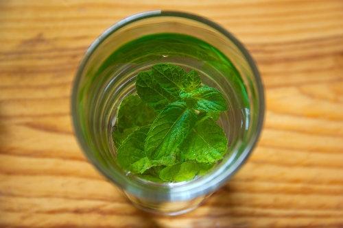 Drink Salvia With Water Dutch Headshop