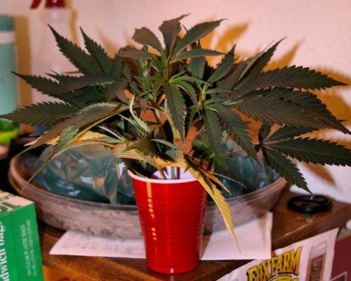 fresh weed cuttings
